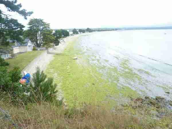 Cap_Coz algues vertes